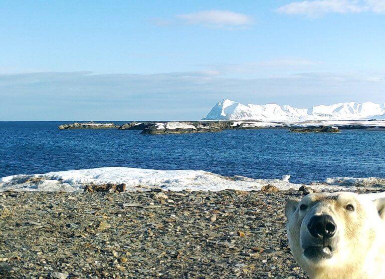 Ik Foundation Fcs Antarktis Eisbaer Wasser Schnee