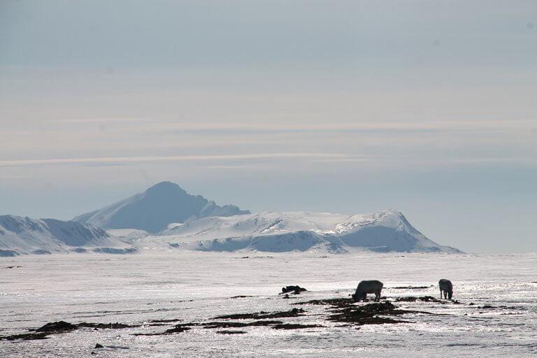Ik Foundation Fcs Antarktis Eisbaren Schnee Berge